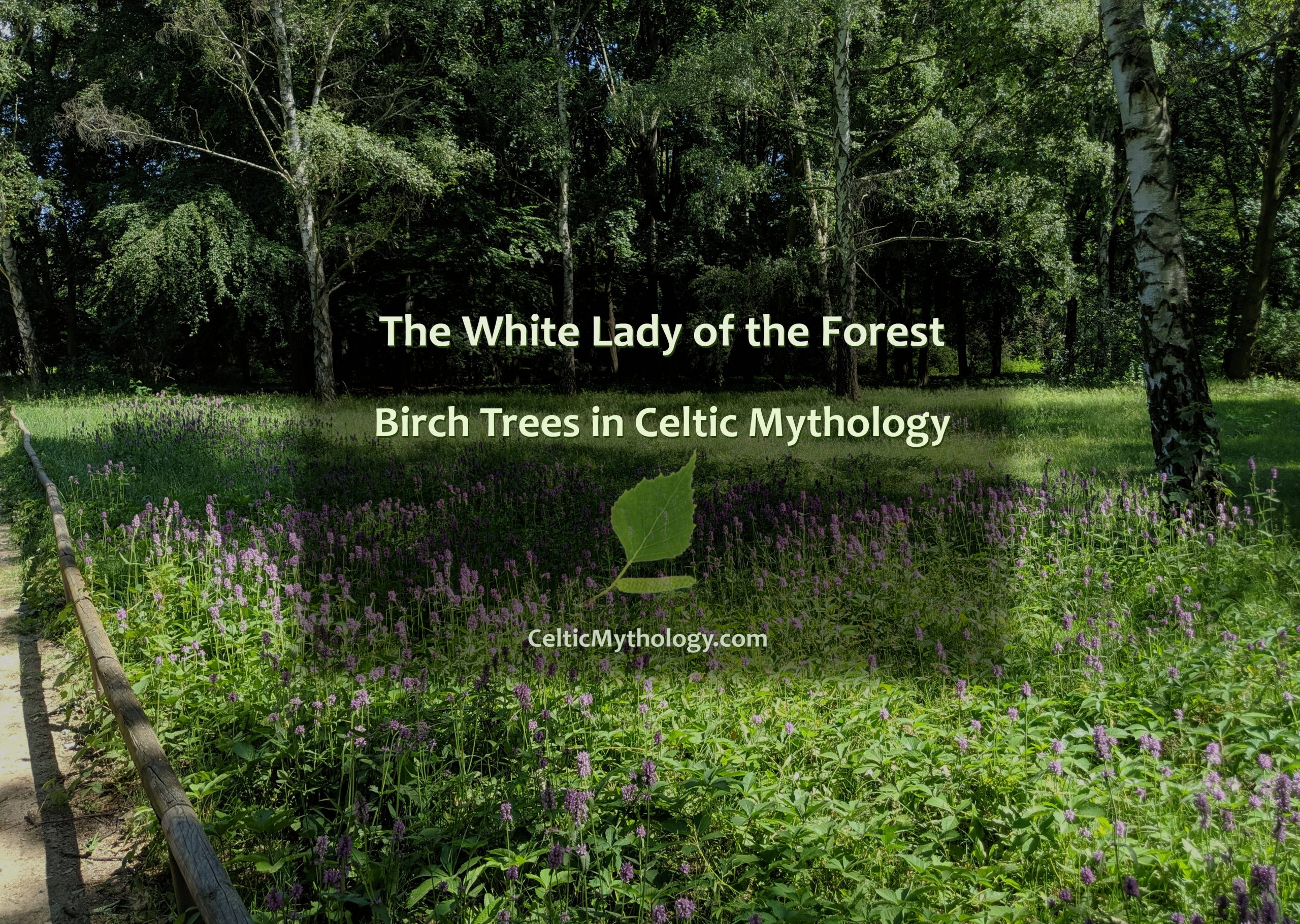 Birch Trees in Celtic Mythology