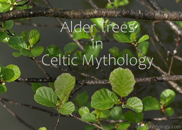 Alder Trees in Celtic Mythology