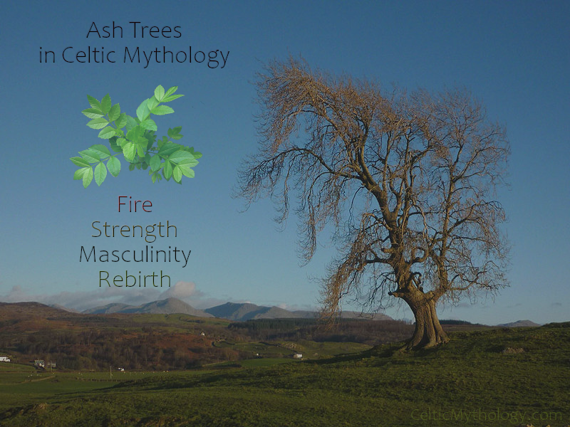 Ash Trees in Celtic Mythology