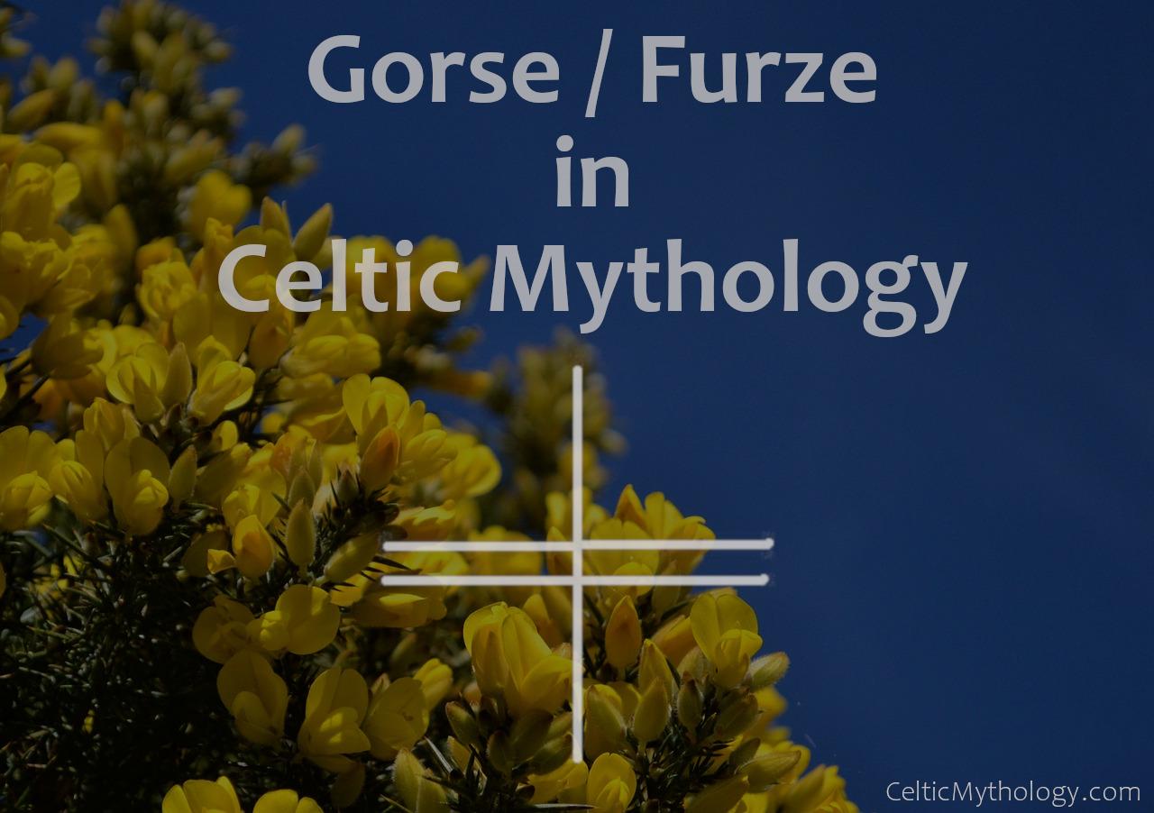 Gorse in Celtic Mythology