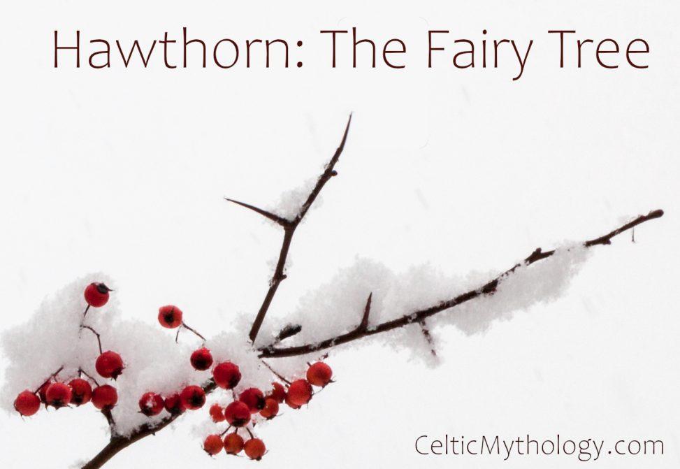 Hawthorn in Celtic Mythology