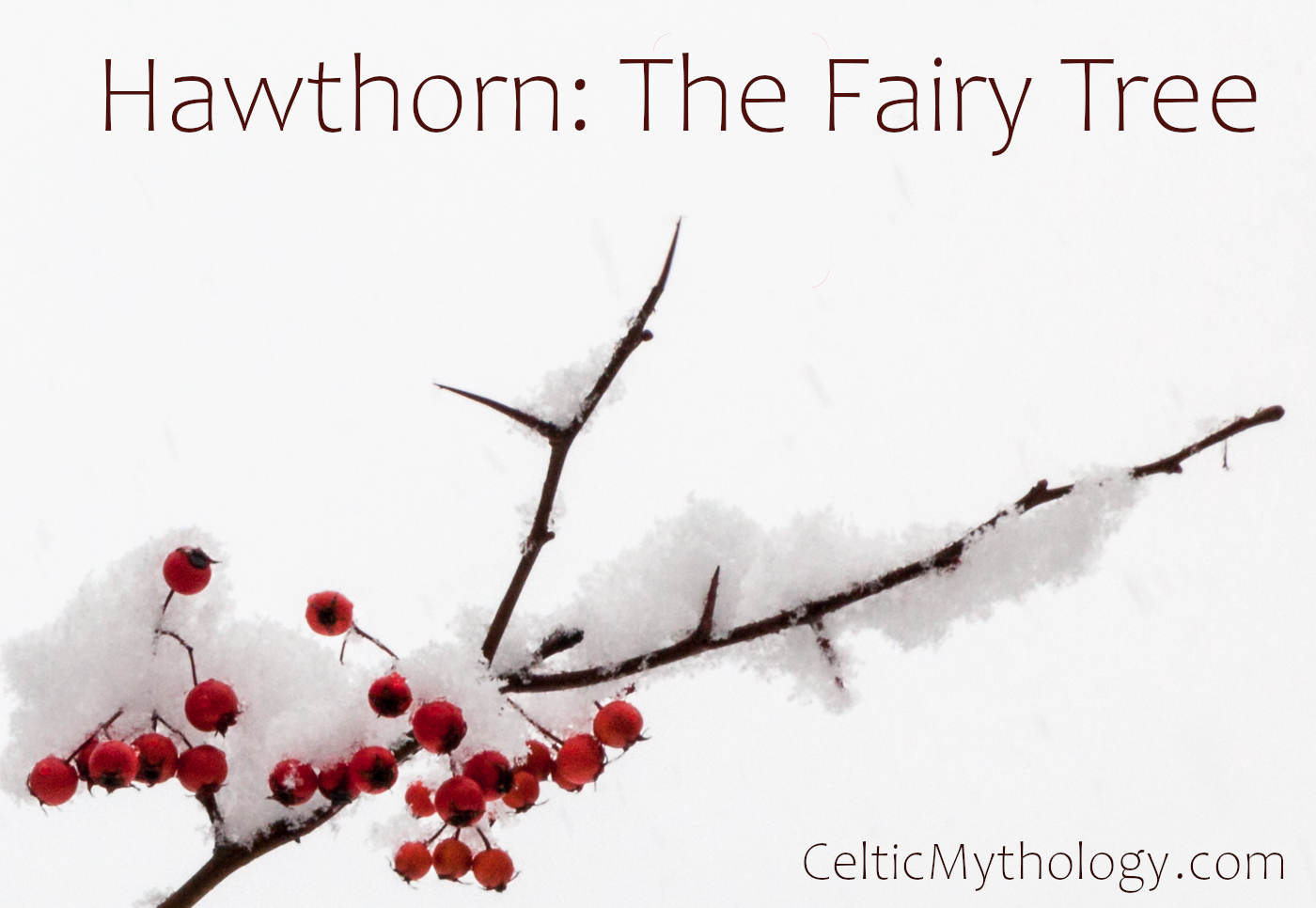 Hawthorn in Celtic Mythology