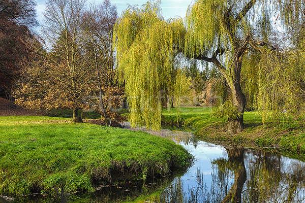 Willow Tree in Celtic Mythology